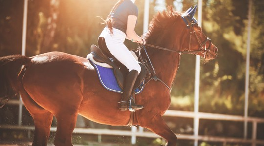 horse riding apparel brands